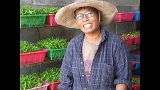 ปลูกผัก สร้างรายได้เสริม ที่บ้าน สร้างรายได้จริง 1,000 บาท